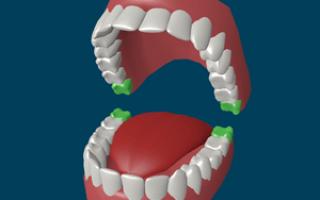 Зубы у взрослого человека