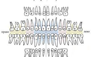 Порядок зубов