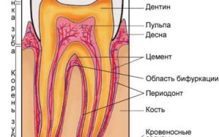 Название зубов у человека