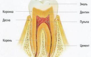 Сколько у человека молочных зубов