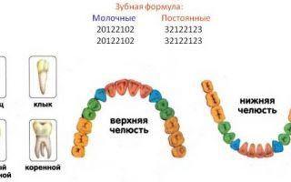 Номера зубов в стоматологии схема