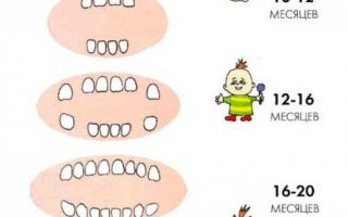 Как лезут зубы у малышей