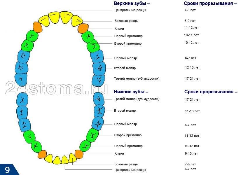 Особенности десен при прорезывании зубов