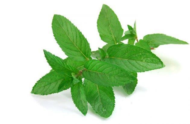 В состав пасты Пародонтакс входит 6 растительных компонентов