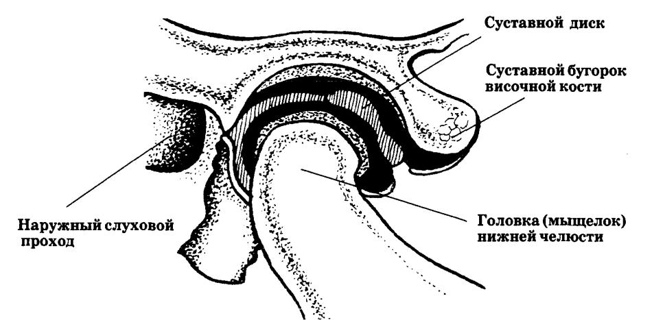 Болит голова ухо и челюсть