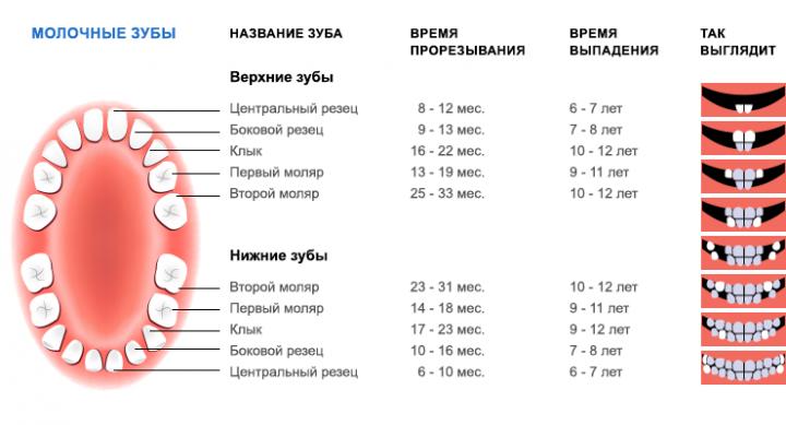Таблица прорезывания и выпадения молочных зубов у детей