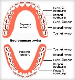 последовательность прорезывание коренных зубов