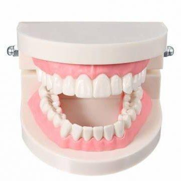 сколько каналов в нижних зубах
