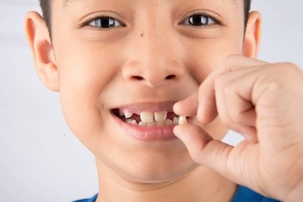 сроки смены зубов