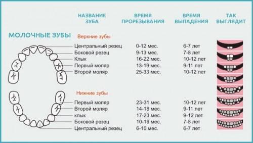 Наглядная схема замены молочных зубов