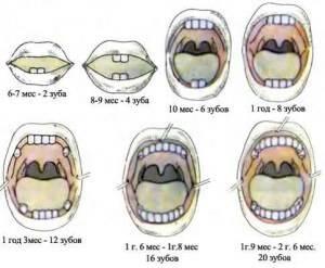 возраст когда у ребенка есть все молочные зубки