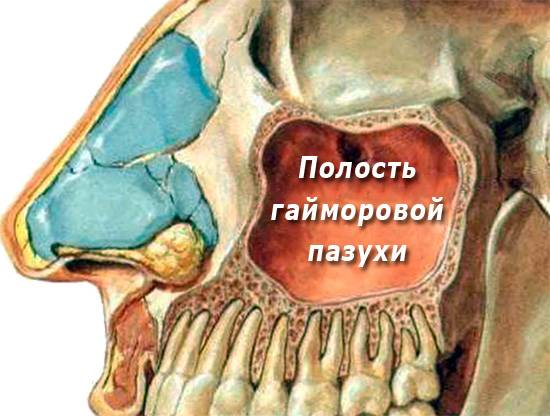 На этой картинке хорошо видно, насколько близко корни зубов на верхней челюсти подходят к гайморовой пазухе.